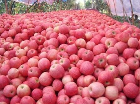 manzana-china-custom