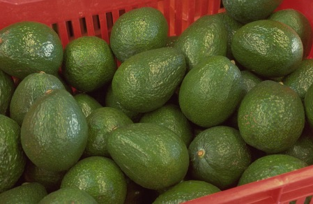 aguacate006