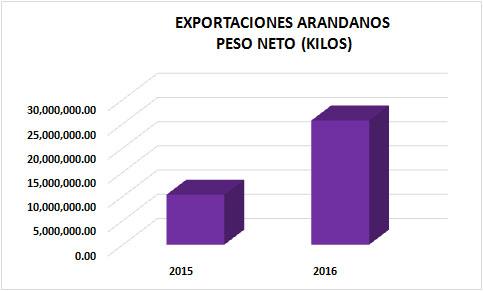 arandanos1