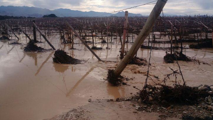 uvas-desastres