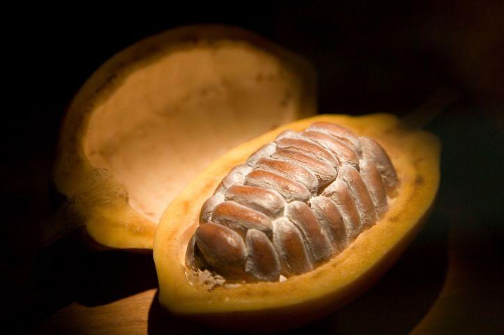 cacao-cacao