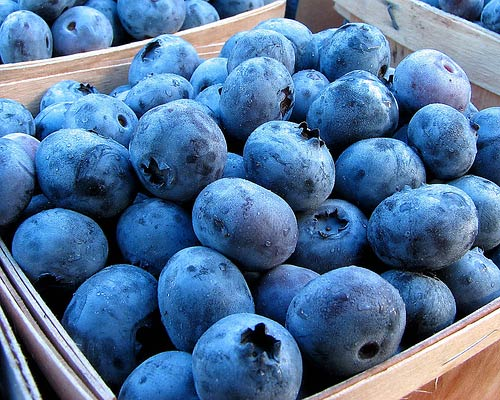 blueberries-fruits-export-725856