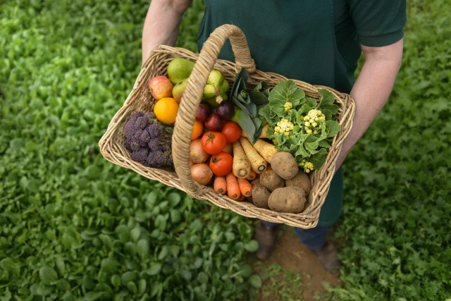 Farmer carrying organic vegetables in basket for delivery, close up