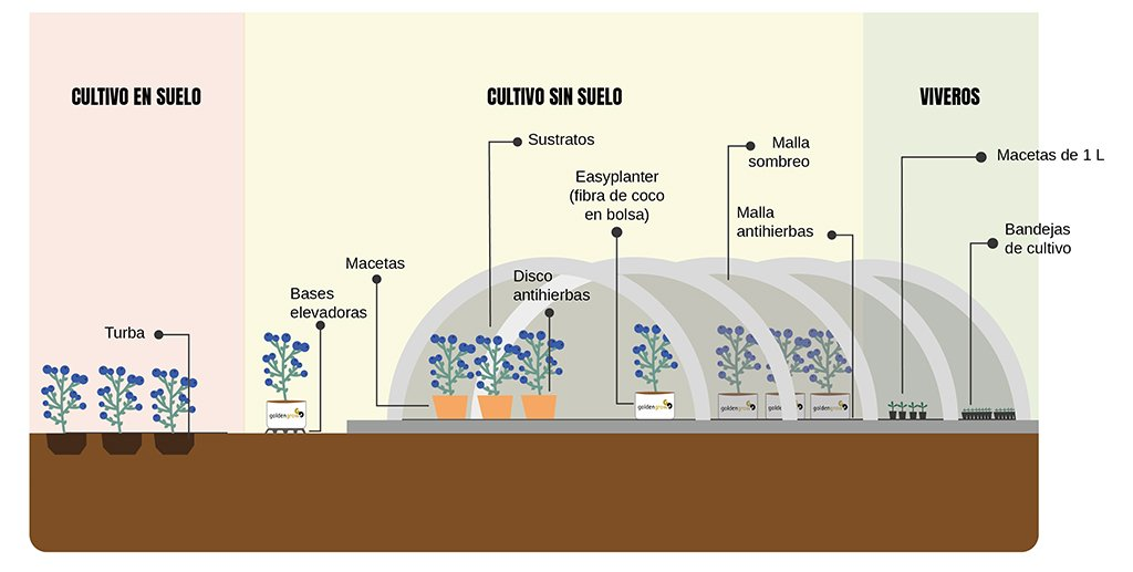 soluciones-agronomicas-berries