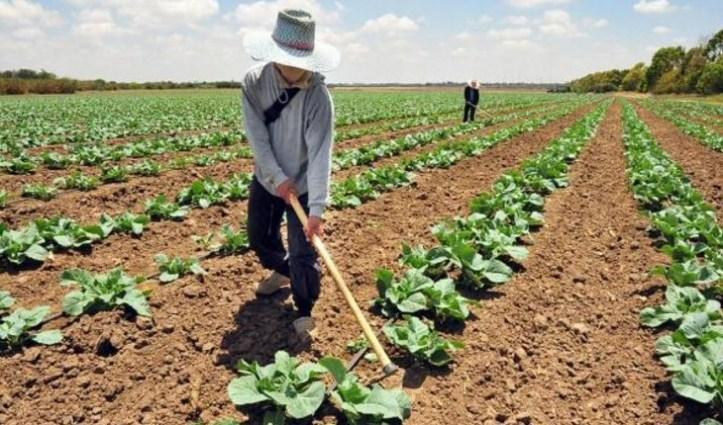 agricultura-bpa.jpg