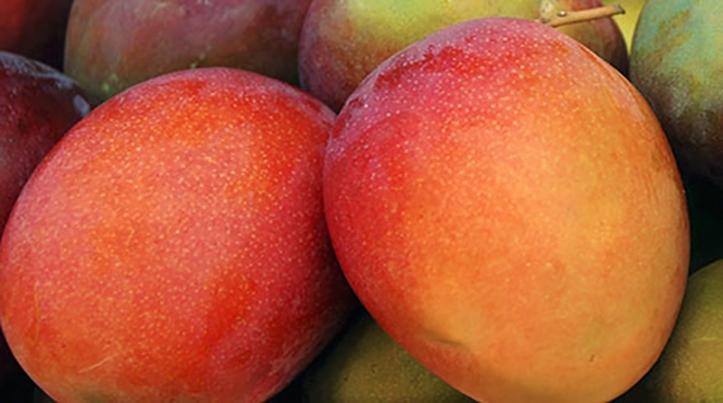 Mango-Kent
