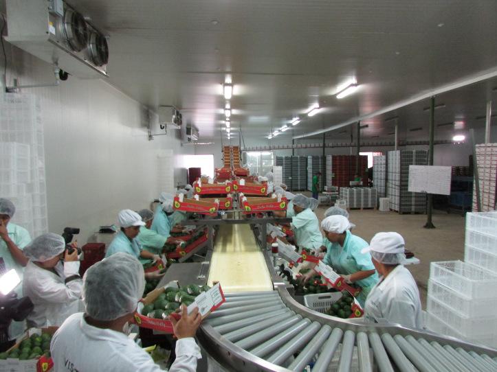 verdeflor-planta-procesadora